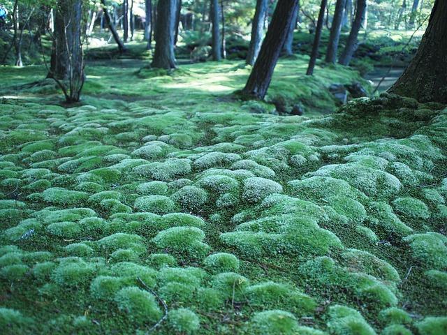 苔寺(京都)拝観の予約について!周辺おすすめスポットもご紹介