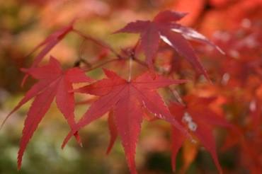 おこしやす!紅葉も桜も名所といえば京都!紅葉の見頃や見所を大公開!